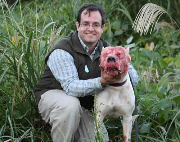 Pin Dogo-argentino-hunting-pigs on Pinterest